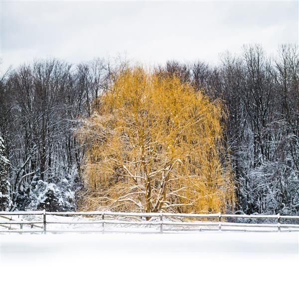 Beautiful tree amidst a snowcovered woods - provided by Moments Suspended In Time Photography